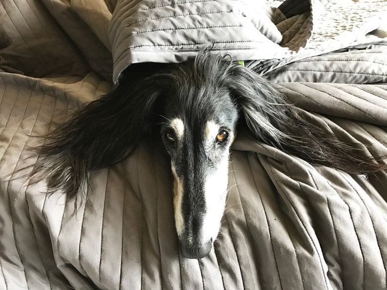 Saluki Hound Calendar 2020 Custom Made Rescue Fundraiser