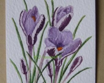 Crocus minimus - ACEO original watercolour painting