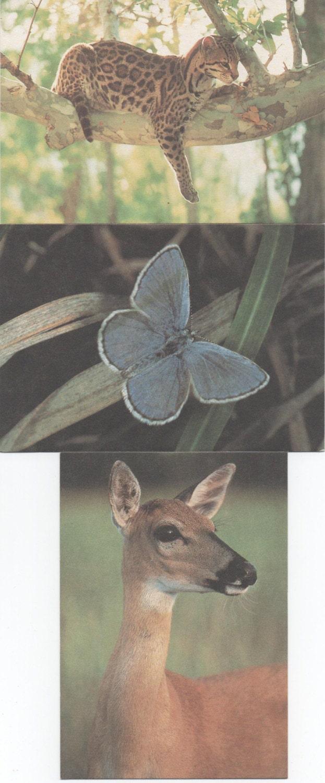Set Of 3 Blank Nature Conservancy Note Cards Ocelot Karner Etsy