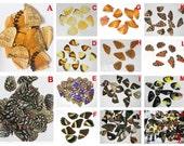 10pcs real butterfly wings,3D Butterfly specimens wings,Real Dried Moth butterflies wings for ring earrings necklace framed butterflies