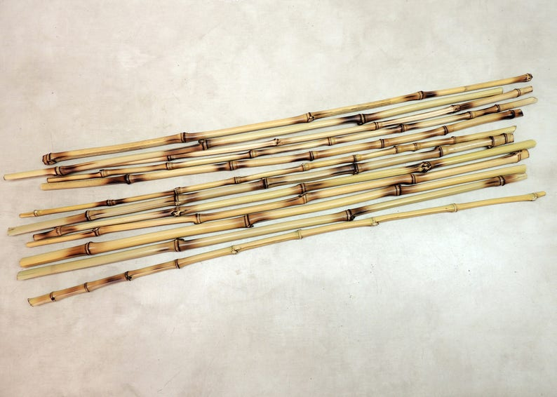 12 Heat Treated Golden Bamboo 24 long for Decor Vase image 1