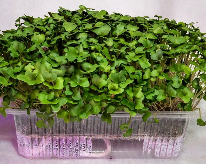 Original Superfood, Broccoli Microgreen Grow Kit
