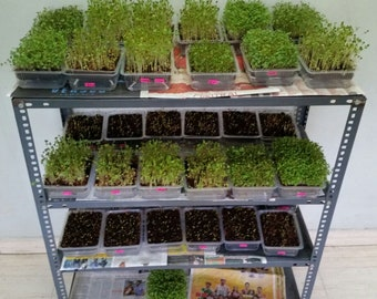 School & Institutional Microgreen Starter, Trays, 3 LED Lights, Scale, Seeds, Media 100+ crops