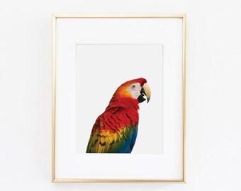 Macaw Parrot Nursery Art Print | Parrot Wall Art | Nursery Printable | Nursery Wall Art | Macaw Art Print | Bird Art Print | Bird Wall Art |