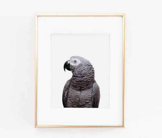 Parrot Nursery Art Print Parrot Wall Art Nursery Printable   Etsy