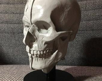 Greyscale Anatomical Study