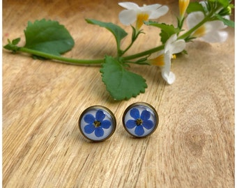 Studs   real forget-me-not flowers   bronze   approx. 12 mm diameter each