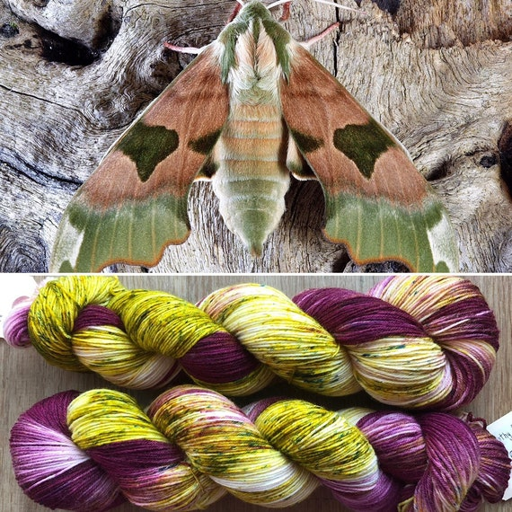 Christmas Hawkmoth, indie dyed merino nylon sock yarn
