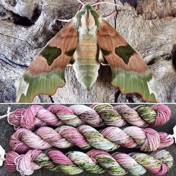 February Hawkmoth 20g miniskein, indie dyed merino nylon sock yarn