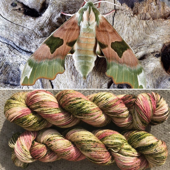 Elephant Hawkmoth BFL, indie dyed bluefaced leicester nylon sock yarn