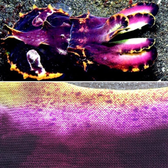 SALE Flamboyant Cuttlefish Sock Blank