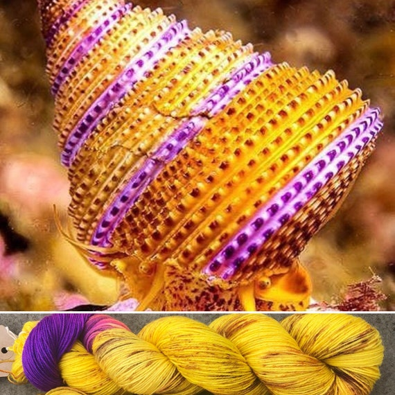 Purple Ring Top Snail BFL, bluefaced leicester nylon sock yarn