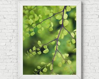 Leaf Photo Print - botanical, garden photography, botanical art print, gifts for her, gift for gardener, office decor, home wall art, green