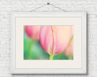 Tulip Photo Print - flower photography, spring, botanical, farmhouse wall art, gifts for her, easter gift, housewarming, pink tulip decor