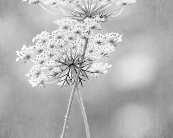 Queen Anne's Lace photo print - flower photography, black white, botanical, photo print, wall art, home decor, nature gift, gifts for her