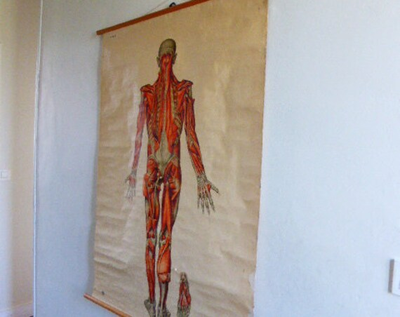 Educational and educational poster, The human body the muscles, on canvas, wooden stick, Dresden Hygiene Museum circa 1950