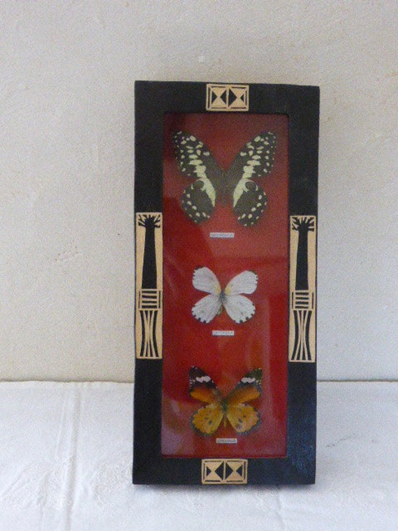 Ancient showcase frame composed of 3 butterflies of different