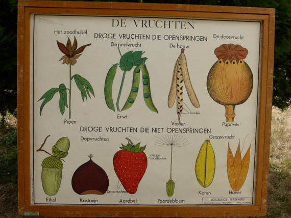 School poster editions Rossignol Montmorillon Vienne number 9 and 10, front and back, seeds, shoots vintage 1970