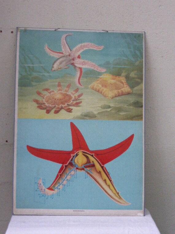 For a seaside atmosphere, old school poster starfish, cardboard, vintage 1972, rigid cardboard