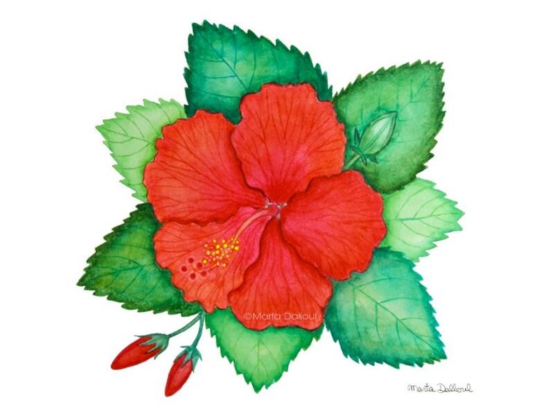 Tropical Flower Art Print Red Hibiscus Flower Watercolor Etsy