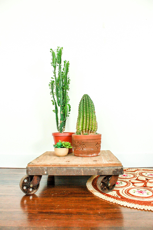 Table Basse Terrarium A Vendre panier plat industriel vintage, industriel roulant chariot avec roulettes,  table basse chariot industriel, peuplement industriel, plante rustique