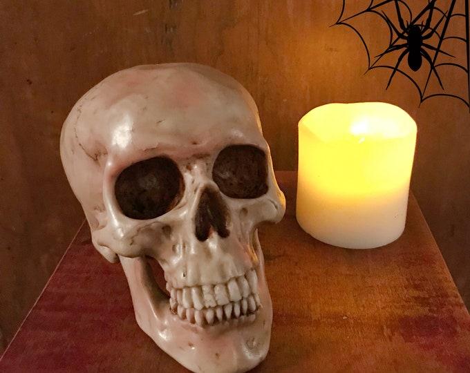 Featured listing image: Spooky Human Skull Replica - Halloween Décor - Skeleton Skulls - Decorative Skull - Curiosities - Bones