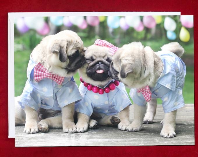 NEW! Pug Birthday Card - Puggy Kisses - 5x7 - Pugs and Kisses