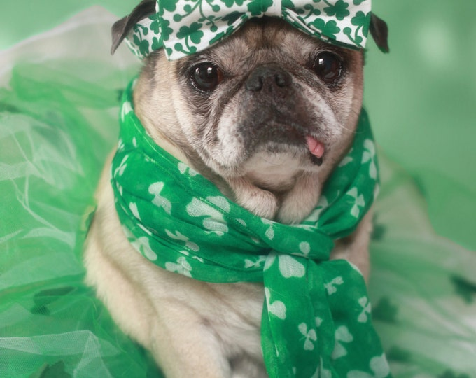 Lucky Girl St. Patrick's Day Pug Card by Pugs and Kisses