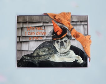 Box of 10 Halloween Cards Funny - Why Yes...I Can Drive A Stick - 5x7