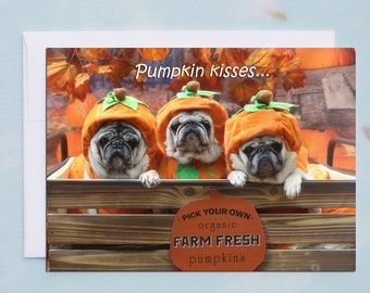 BOX of 10 Thanksgiving Cards - Pumpkin Kisses - Funny Pug Cards by Pugs and Kisses - 5x7