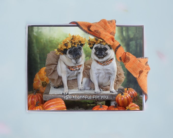Box of 10 - THANKSGIVING Cards Funny - So Thankful For You - 5x7