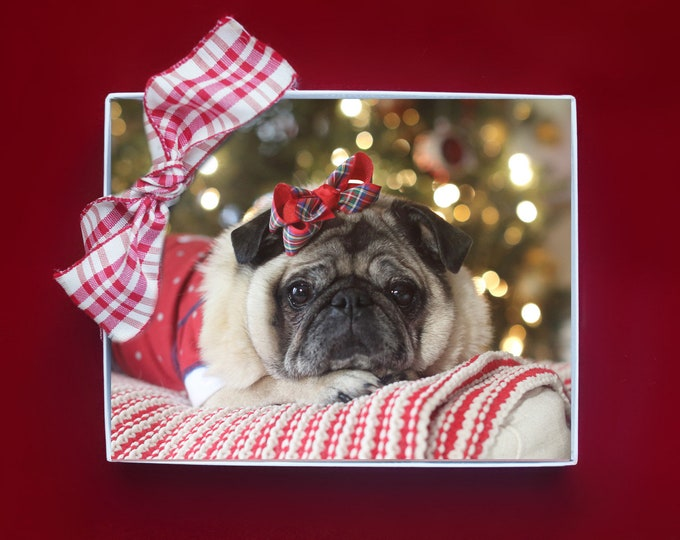 ALL NEW - Christmas Note Cards - Let Your Heart Be Light - 10 Pug Note Cards - 4x5