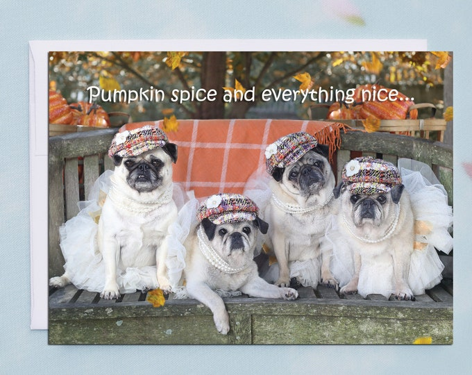 NEW! BOXED Thanksgiving Cards - Pumpkin Spice - Funny Pug Cards by Pugs and Kisses - 5x7