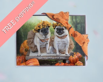 Box of 10 - All New- THANKSGIVING Cards Funny - So Thankful For You - 5x7