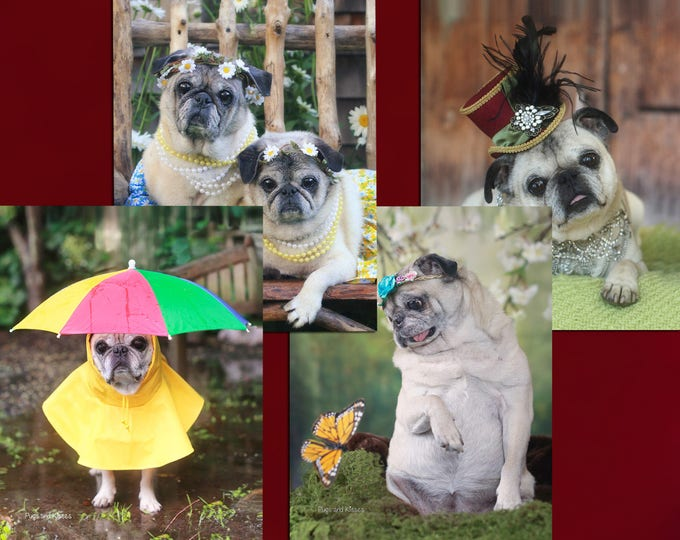 Cute Note Cards  - Adorable Pugs Note Cards Boxed Set - 8 Pugs Note Cards - 4x5