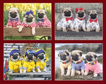 NEW! Cute Puppy Note Cards  - Pug Puppy Note Cards - Pugs Note Cards - 4x5