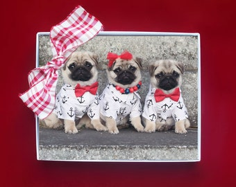 NEW! Cute Note Cards  - Pug Puppy Note Cards - Pugs Note Cards - 4x5