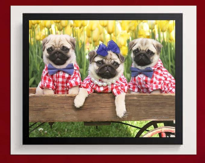 Pug Wall Art - Tulip Pups - Pug Puppies Art Print - Pug Gift - by Pugs and Kisses 5x7 8x10 11x14 16x20