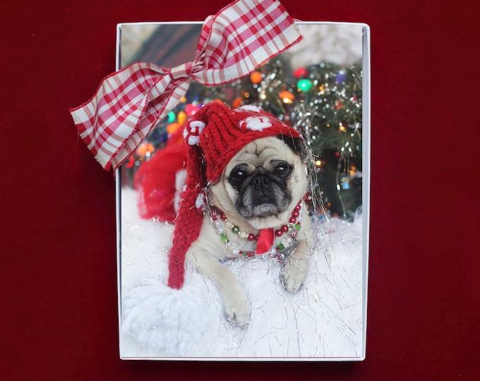 ALL NEW - BOXED Christmas Cards - Permanently On the Naughty List- Pug Christmas Card- 5x7