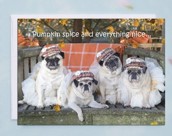 Thanksgiving Cards - Pumpkin Spice - Funny Pug Cards by Pugs and Kisses - 5x7