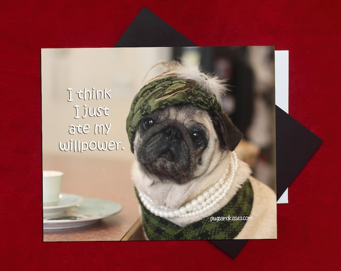 Pug Magnet SALE - I Think I Just Ate My Willpower - 5 x 4 Pug magnet - by Pugs and Kisses