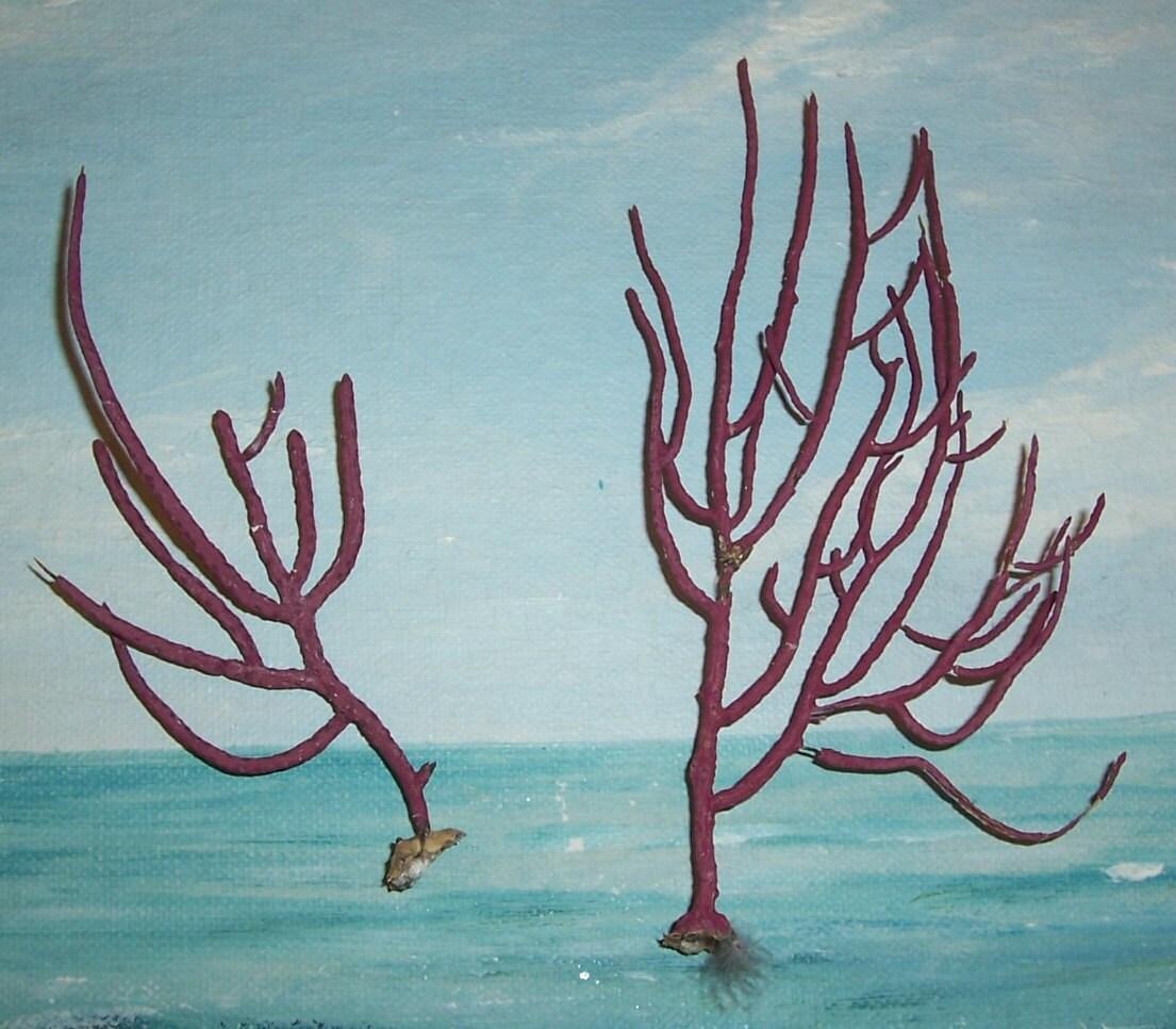 kleine paar falsche Gorgonien Meeresfächer Peitsche Red SEA