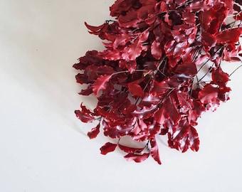 Pittosporum - Preserved - Red