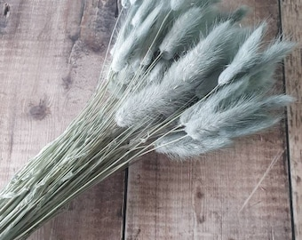 Sage Green Bunny Tails | Dried Flowers | Rustic Home Wedding Decor
