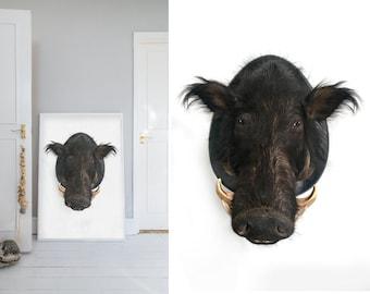 Photograph,  Wild Boar, Boarhead, Taxidermy, Wild, Animal, White, Brown, Home decor, Wall art, Home, Minimal, Print, Photo, Art