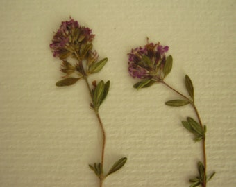 Herbarium with natural dried flowers