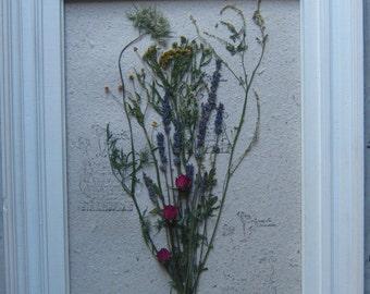 herbier de fleurs séchées