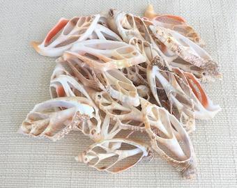 2 strombus aurisdiane center cut shells Seashells Crafts Jewelry
