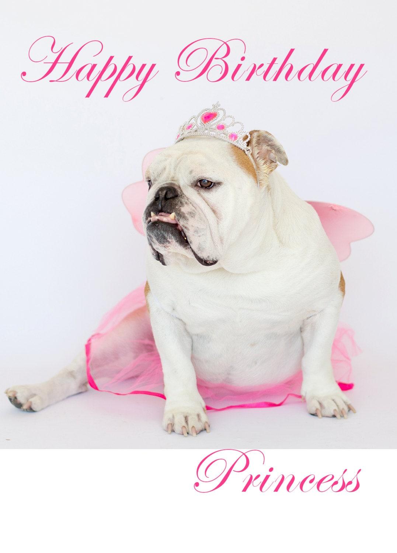 Happy Bulldog birthday pictures