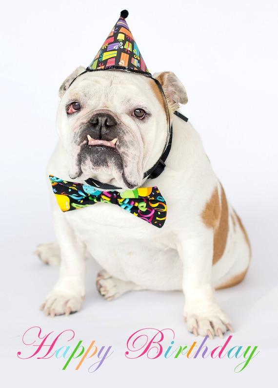 Joyeux Anniversaire Chapeau Et Noeud Papillon Bulldog Anglais Carte Fine Art Photography Print Purrfect Pawtrait Pet Photography Photographie